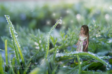 fairy drops